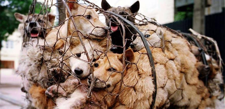 china-hunde-katzen-02-slider
