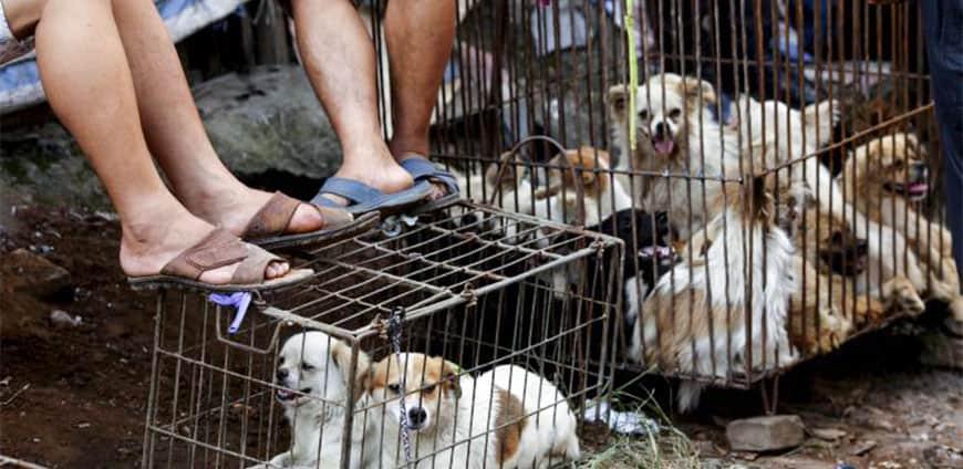 china-hunde-katzen-04-slider