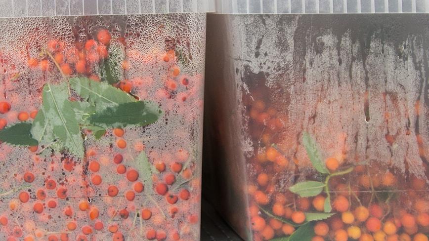 science-bunker-fermentation-4