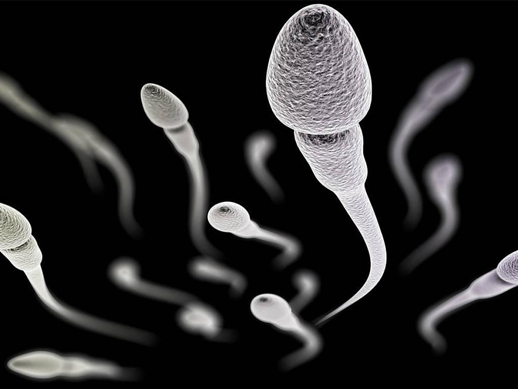csm_Sperma-Header_bbcdc52484