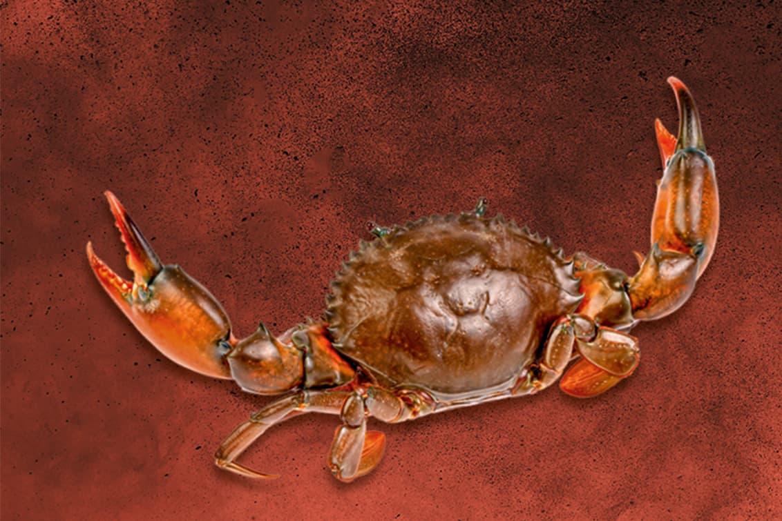 RP243-fb-crabs-10