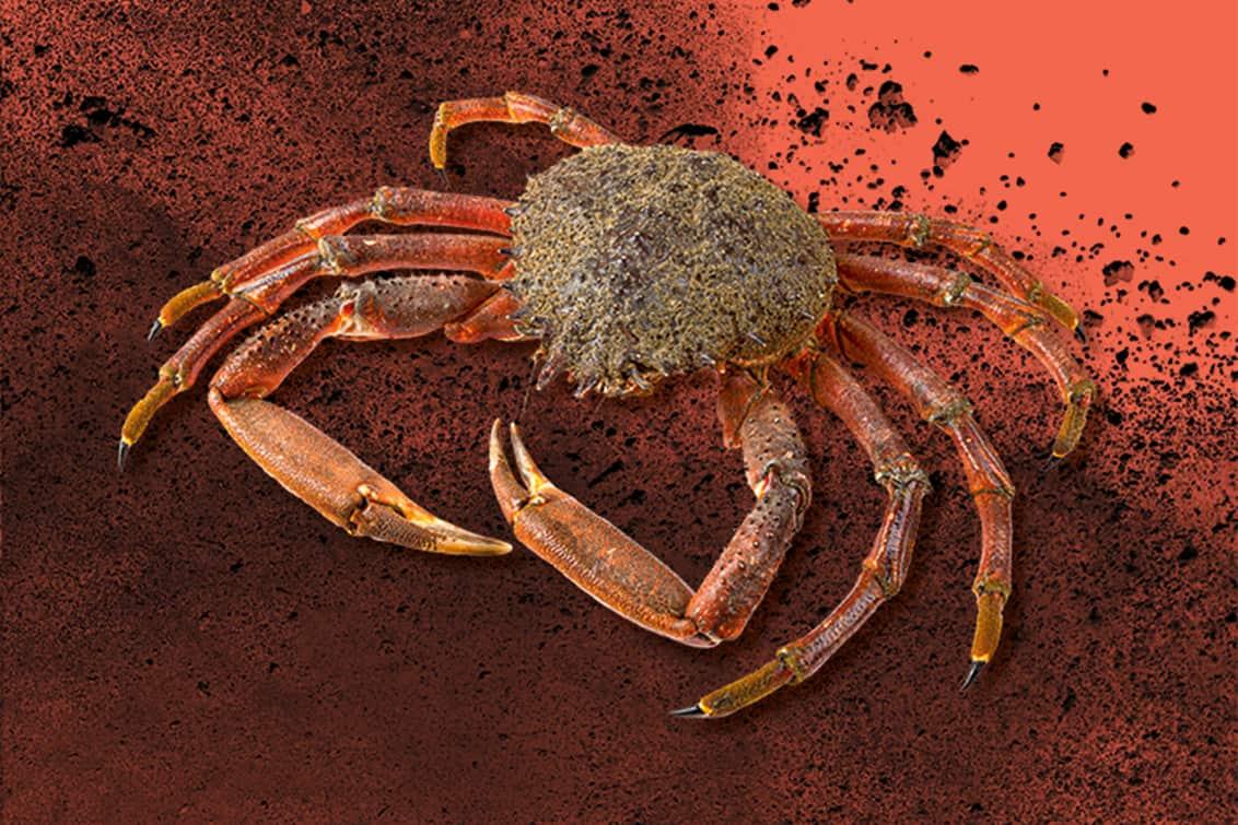 RP243-fb-crabs-12