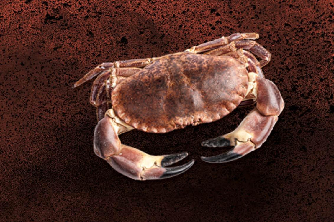 RP243-fb-crabs-2
