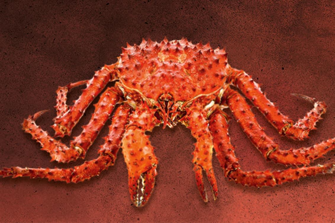 RP243-fb-crabs-4