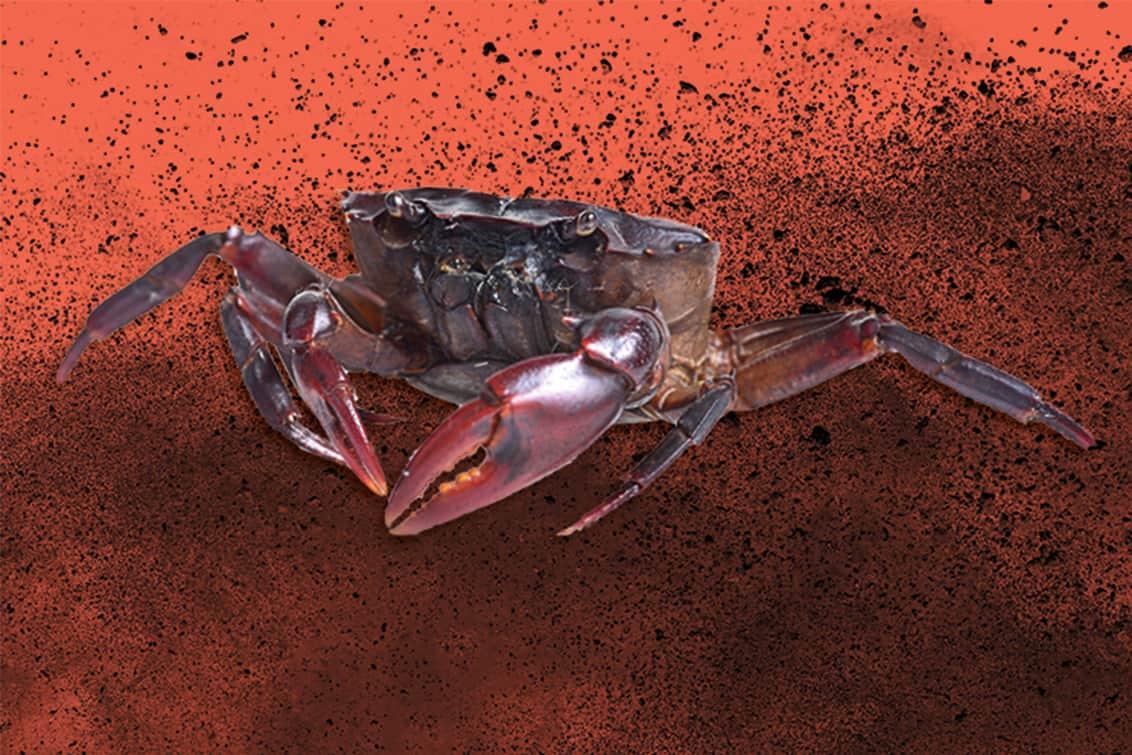 RP243-fb-crabs-9