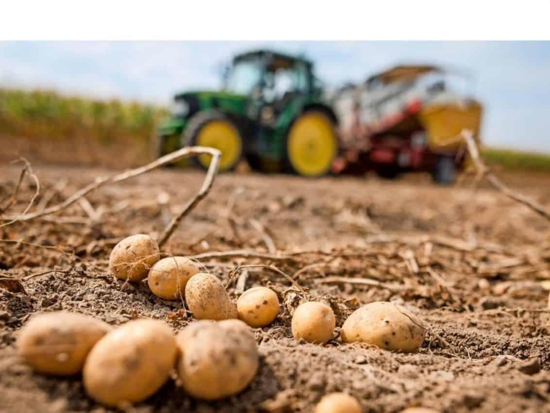 Schon-um-ein-Drittel-gestiegen-Erzeuger-warnen-vor-hoeheren-Preisen-fuer-Kartoffeln_reference_4_3-1132x849