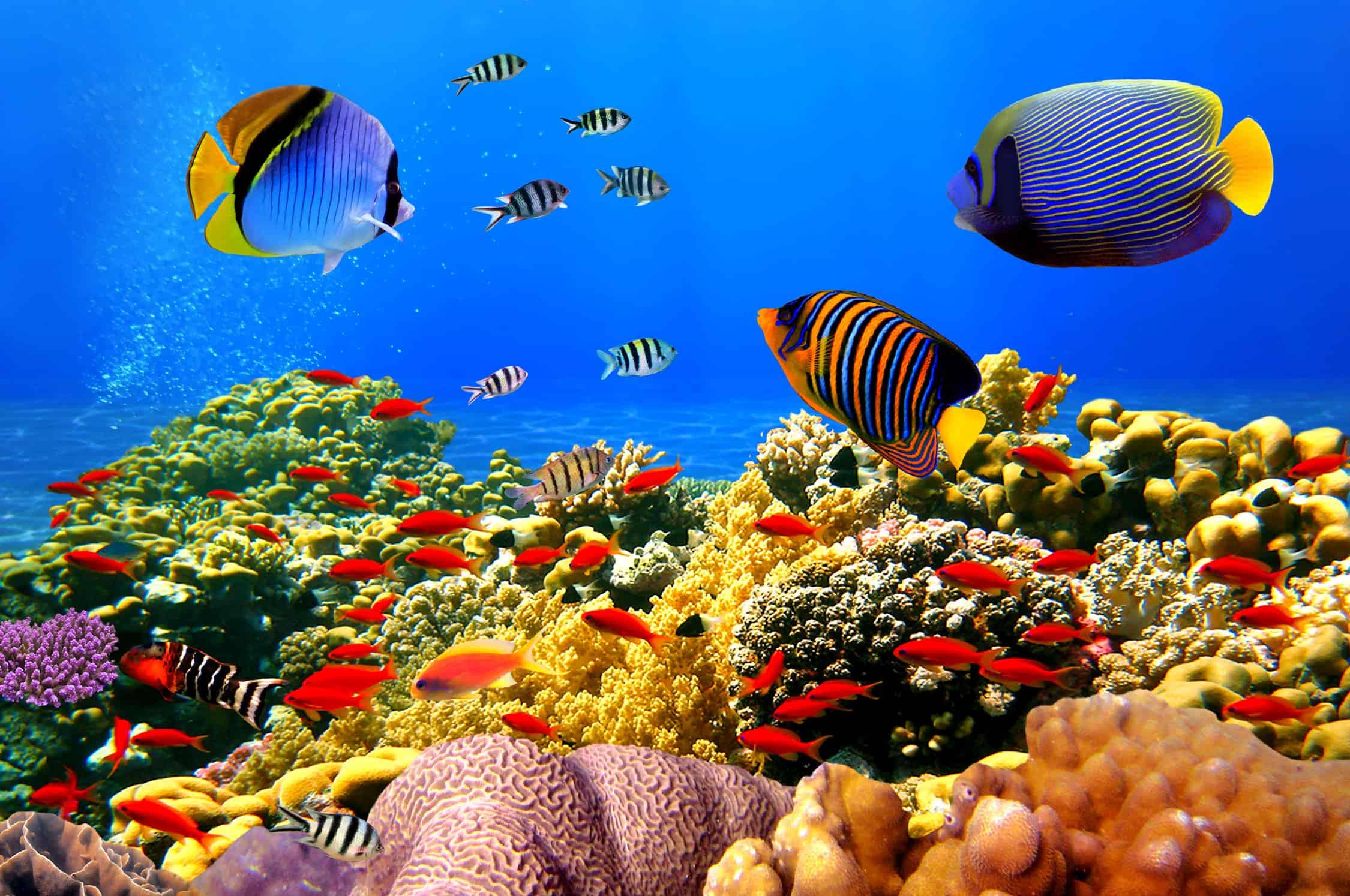aegypten_korallenriff