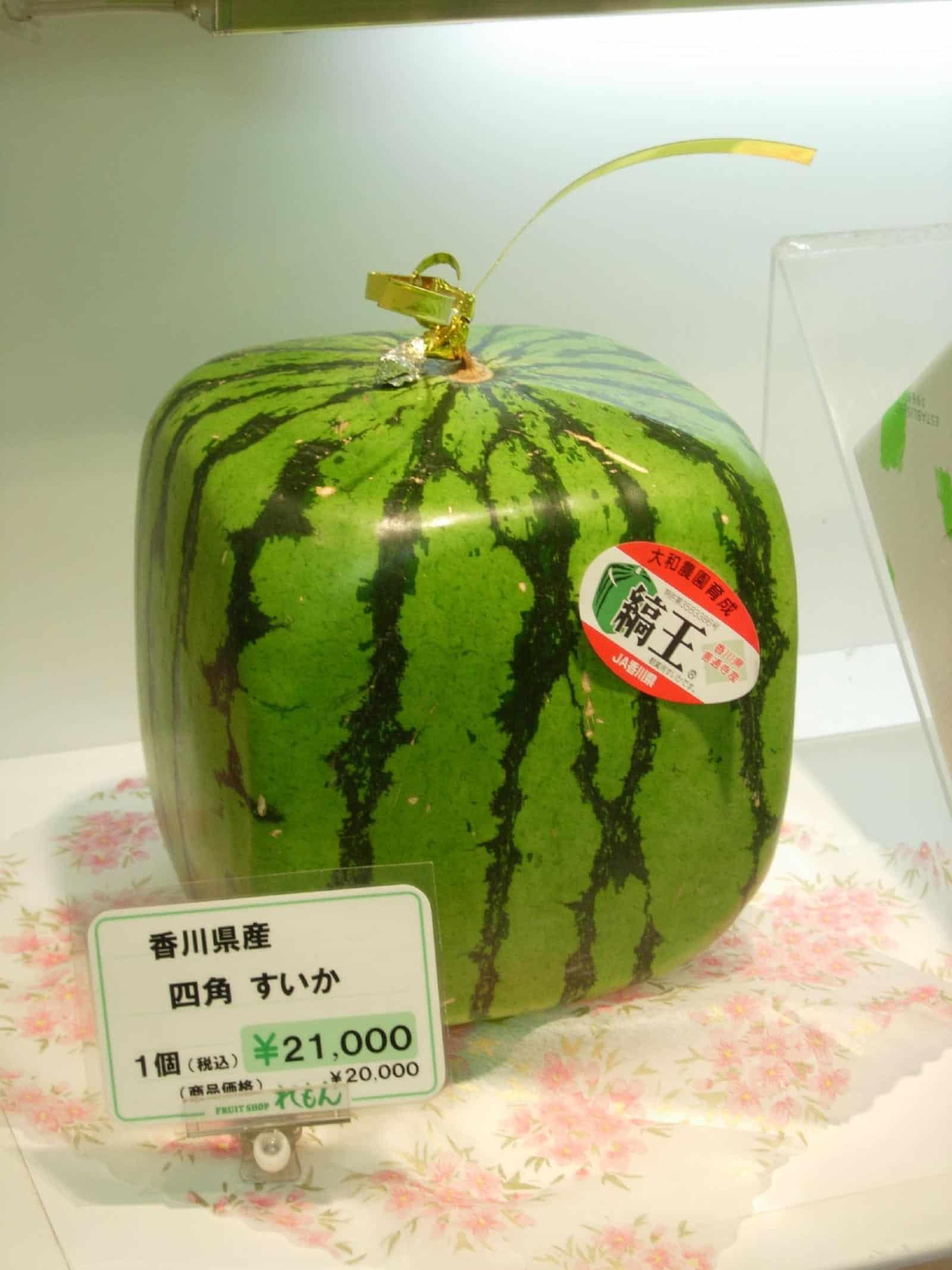 Japan-teuerste-Wassermelone-quadratisch-rechteckig